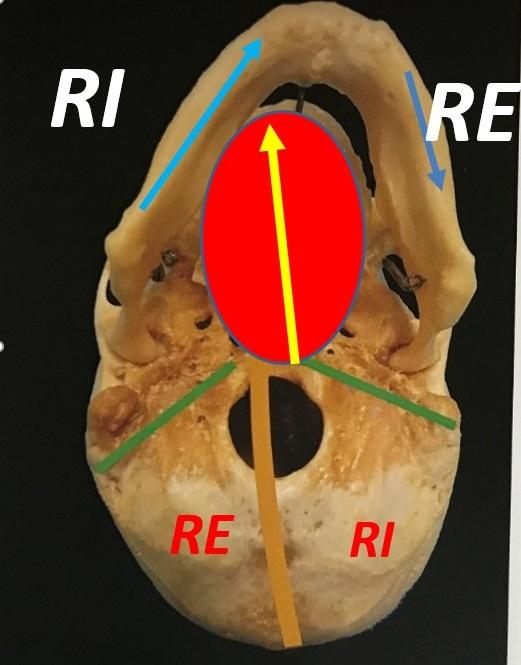 Cranio-Mandibola in Torsione